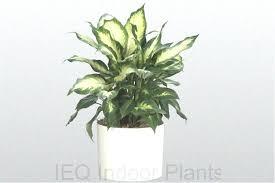 best indoor plants low light best indoor plants low light best of best indoor plants gem