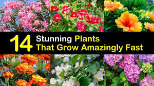 14 stunning plants that grow amazingly fast