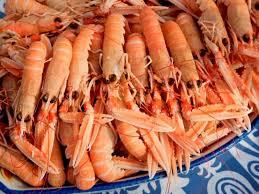 """Résultat de recherche d'images pour """"mer marocain"""""""