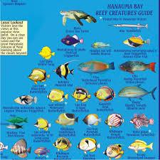 Oahu Fish Chart Hanauma Bay Guide Frankos Fabulous Maps Of Favorite