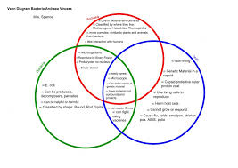 Comparing Animal And Plant Cells Venn Diagram Cells Of A Prokaryotic And Eukaryotic Cells Venn Diagram Free
