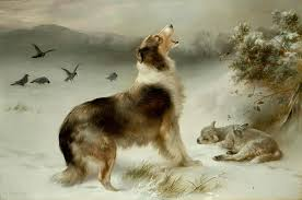 found collie and lamb print by walter hunt