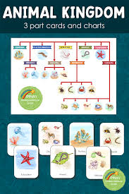 Animal Kingdom 3 Part Cards And Charts Animal Kingdom