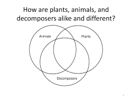Venn Diagram Plants Activity 2 1 Zooming Into Plants Animals And Decomposers Ppt