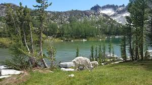 outdoor nature mountains. Mountain Goats In The Enchantments! #hiking #camping #outdoors #nature #travel Outdoor Nature Mountains .
