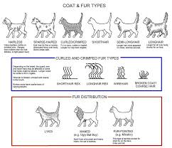 Coat Fur Types Curly Cat Cat Hug Cat Colors