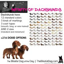 Dachshund Color Chart Dachshunds Have Over 200 Possible Coat Color Size And Coat
