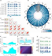 impact of dna methylation on 3d genome