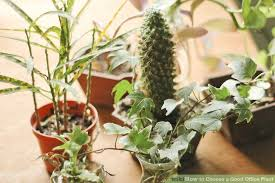 plants for windowless office. image titled choose a good office plant step 6 plants for windowless