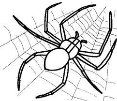 Small Picture Spider Web And Spider Coloring Page Cute Spider Pinterest