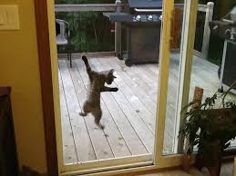 cat on sliding glass door screen
