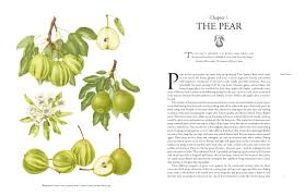 Pear Identification Chart The Book Of Pears The Definitive History And Guide To Over
