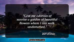 Sunshine Quotes Famous Sunlight Quotations Sayings Magnificent Wonderful Quotes Usi Comg Flowers