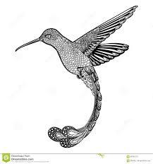 колибри стиль Zentangle также вектор иллюстрации притяжки Corel
