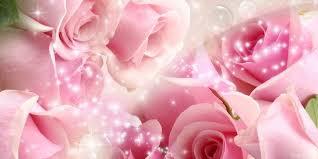 pink roses wallpapers full hd wallpaper free