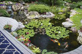 koi ponds and water gardens water