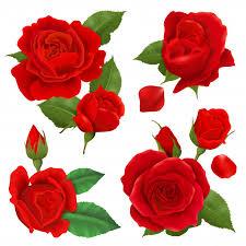 realistic rose flower icon set