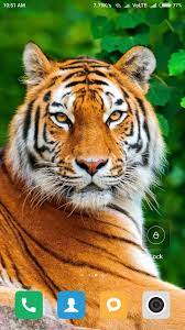 HD Tiger Wallpapers for Android - APK ...