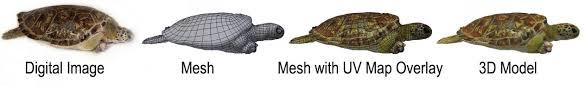 Creating <b>3D</b> Models of Sea <b>Turtles</b> — Digital Life