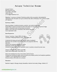 Minimalist Resume Template Word Fresh Free Creative Resume Templates