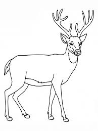 Small Picture Deer coloring page Animals Town Free Deer color sheet