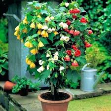 plants for full sun containers in pot outdoor potted plants full sun best shrubs for containers