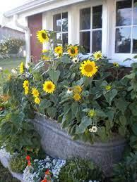garden containers sunflower garden