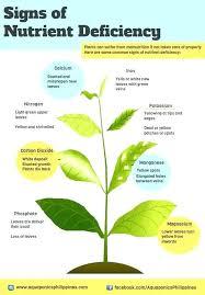 calcium for garden gardening ideas of life organic plant raw uk gardeni