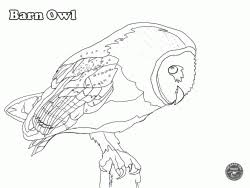 Owl Colouring Pages The Barn Owl Trust