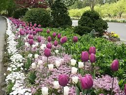 garden bulbs. Bulb Garden Planting Spring Bulbs How To Plant And Grow Type Plants I