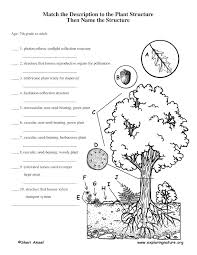 Worksheets For Grade 1 Plants: What plants need to grow worksheet ...
