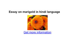 essay on marigold in hindi language google docs