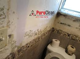 for philadelphia and south jersey 7 steps to prevent bathroom mold