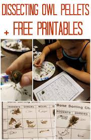 Free Printable Owl Pellet Bone Sorting Chart Www