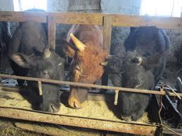 Крым растениеводство и животноводство
