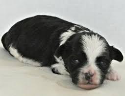 puppy development two weeks old