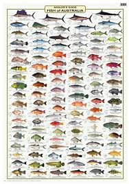 Australian Reef Fish Species Chart Fish Identification Wall Charts Camtas Marine Maps