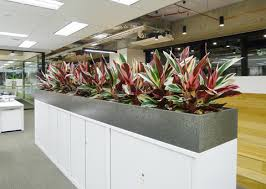 office planter boxes. office planter boxes r
