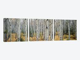 aspen trees in a forestalberta canada by panoramic images 3 piece canvas wall art on 3 piece canvas wall art canada with aspen trees in a forestalberta canada canvas wall art by panoramic