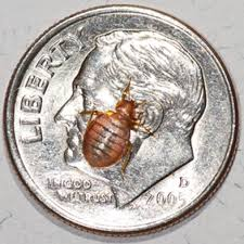 Top 10 Myths about Bedbugs [Slide Show] Scientific American