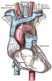 circulatory system simple english the encyclopedia pulmonary circulation change change source