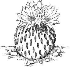 Pelecyphora Aselliformis Of Peyotillo Cactus Kleurplaat Gratis