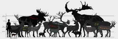 Whitetail Deer Size Chart Deer Size Chart With Names By Redfirew0lf Deer Animals