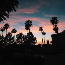 palm trees sunset tumblr. Palm Trees Sunset City - Photo #12. Source- Itcuddles ,, Tumblr Image #3876779 By Winterkiss .