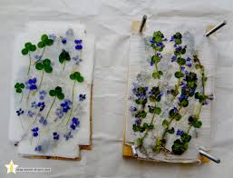 Wax Paper Flower Star Bunny Studio Diy Flower Press