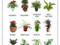 61 лучших изображений доски «Work today»   Растения ...
