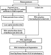 Flow Chart Of The Experimental Design And The Procedures