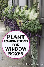 Beautiful flowers for whatever the occasion. Window Box Flower Combinations Flower Box Ideas Inspired By Charleston Window Boxes Gardening From House To Home