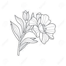 カレンデュラの花白黒図面帳手描きベクトル シンプルなスタイルのイラストを着色するため