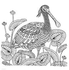 You can easily print or download them at your convenience. Detailed Bird Coloring Page Coloring Pages Printable Com